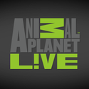 Animal Planet Live - Black Eagle Cam