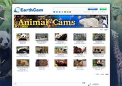 EarthCam - Animal Cams