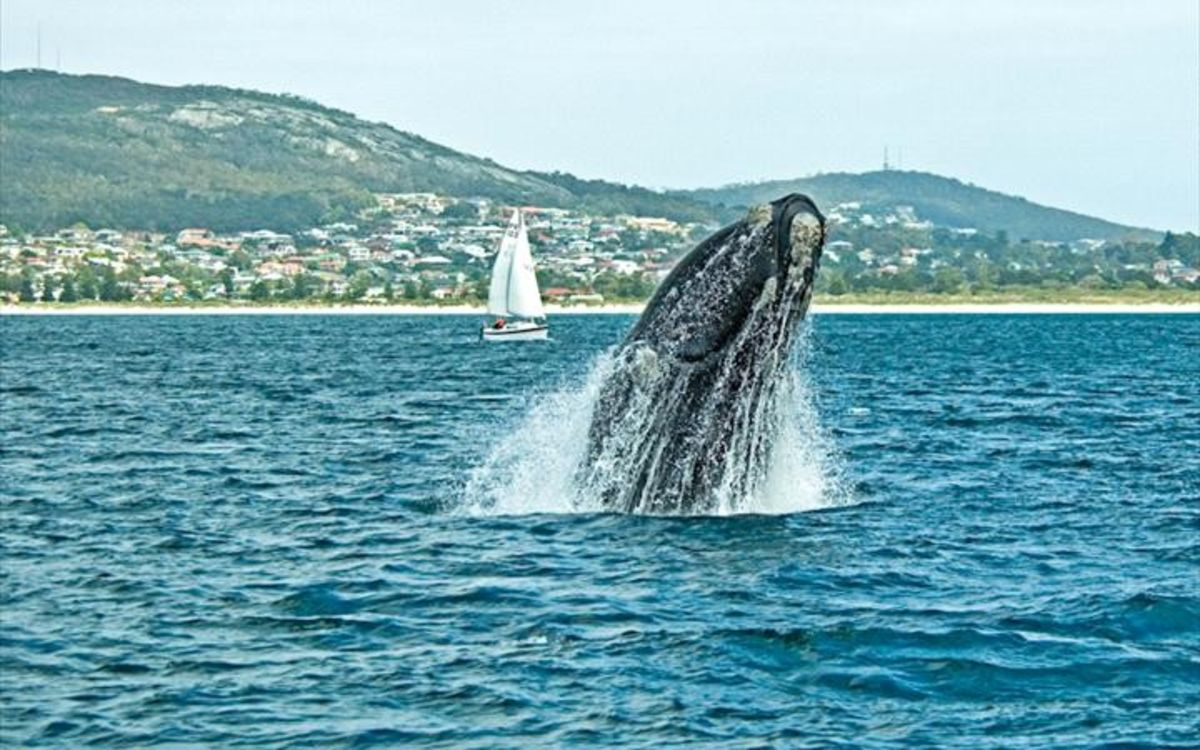 Headline for Top 5 Attractions in Albany – Adventures in Western Australia