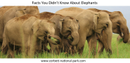 Facts You Didn't Know About Elephants