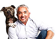 Canine Advice, Tips and Tutorials | Cesar Millan