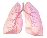 The left lung is smaller to make room for the heart.