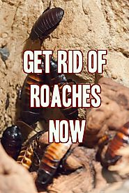 10 Best Ways To Get Rid Of Cockroaches / Roaches
