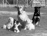 Managing a Multi-Dog Household - How to Keep the Peace! - Whole Dog Journal Article