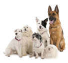 Multiple dogs in your home