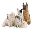 How to Manage Multiple Dog Households