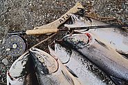 Recreational Fishing in Alaska | Alaska Fisheries
