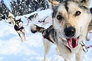 Dog Sledding In Alaska | Alaska Org