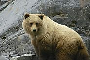 Wildlife Watching In Alaska | LA Times
