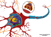 Parts of the Neuron Explained with Videos | The Psych Files Podcast