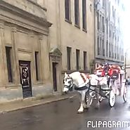 We still have Horses and Carriages at the Old Port of Montreal