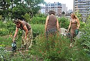 Urban agriculture does not always result in better neighbourhoods