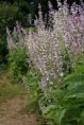 HerbClip: Clary Sage Essential Oil, but Not Lavender Essential Oil, Reduces Stress during Urodynamic Examinations