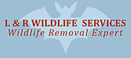 Blog - Wildlife Removal Experts