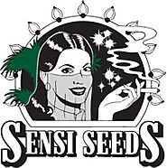 Sensi Seeds Blog News