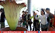 Tokyo Blooms World's Largest Flower First Time After Previous Five Years
