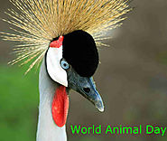Let's Celebrate World Animal Day!