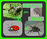 Resources on Bugs and Insects