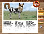 Websites Where Kids Can Learn About Animals