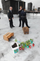 Marijuana mix-up: Brooklyn building superintendent, cops at first mistake tomato plants for pot