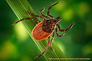 Fight Ticks, Lyme Disease with Natural Tick Repellents