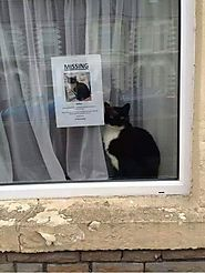 Missing Cat Poster Works Like Charm Finding Missing Cat - Pet Reporters