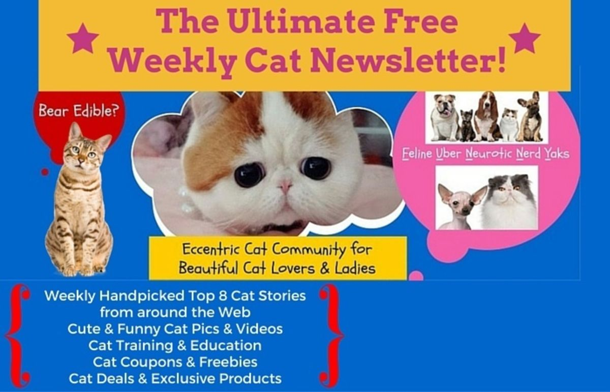 Headline for Pet Reporters Cat Newsletter Issue 1