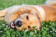 Natural Ways to Protect Your Dog
