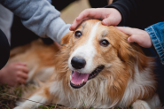Dog Training Approaches to Rebuilding Trust