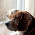 5 Simple Ways to Help Stop Separation Anxiety in Dogs