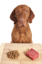 Benefits of a Raw Food Diet for Your Dog