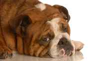 Is Your Dog Depressed? How to Recognize the Symptoms & Some Simple Solutions
