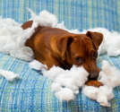 Tips for Stopping Your Dog's Destructive Chewing