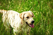 Dog Allergies - Managing An Ongoing Medical Problem