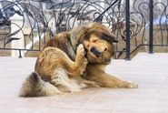 Ways to Stop Excessive Scratching in Dogs