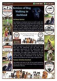 The Best Dog Walking Services in Auckland