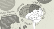 How Does the Act of Writing Affect Your Brain? - Visual News