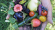 Farm-to-Table-How Locally Grown Food Helps to Create a Healthy Lifestyle