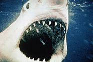 Jaws at 40: 40 Things We Wouldn't Have Without the Original Killer Shark Movie