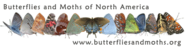 Life Cycle of Butterflies and Moths | Children's Butterfly Website