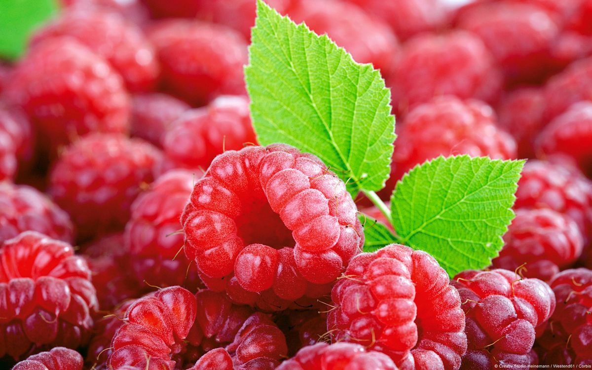 Headline for Raspberry Ketone Reviews