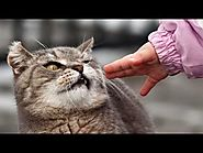 Cats just don't like petting and kisses - Funny and cute cat compilation