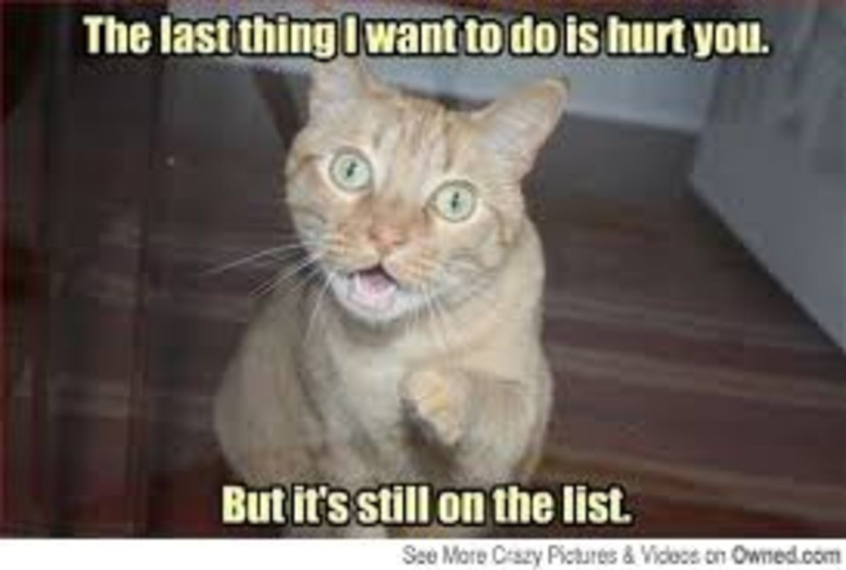 Headline for 10 Very Funny Cat Memes
