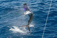 Manuel Antonio Tours at Queposfishingpackages.com