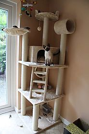 cat tower pics