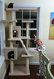 Some Great Cat Towers for Large Cats