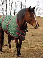 Medium Weight Horse Blankets Powered by RebelMouse