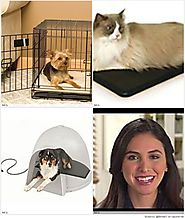 Warming Pads Are Part of Winter Pet Care |