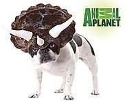 Animal Planet Triceratops Costume