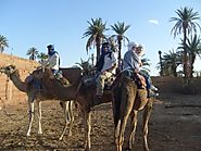 Camel Trekking in the Sahara Desert